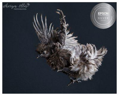 Sheryn Ellis Pet Photography