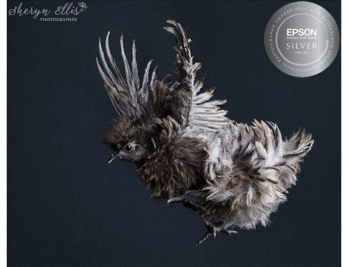 Tallai Pet Photographer